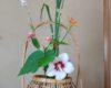 7月の花と墨蹟 慈眼院