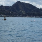6.保田漁港入り口には定置網が設置されている
