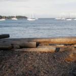 ビーチには流木が多数打ち上げられている